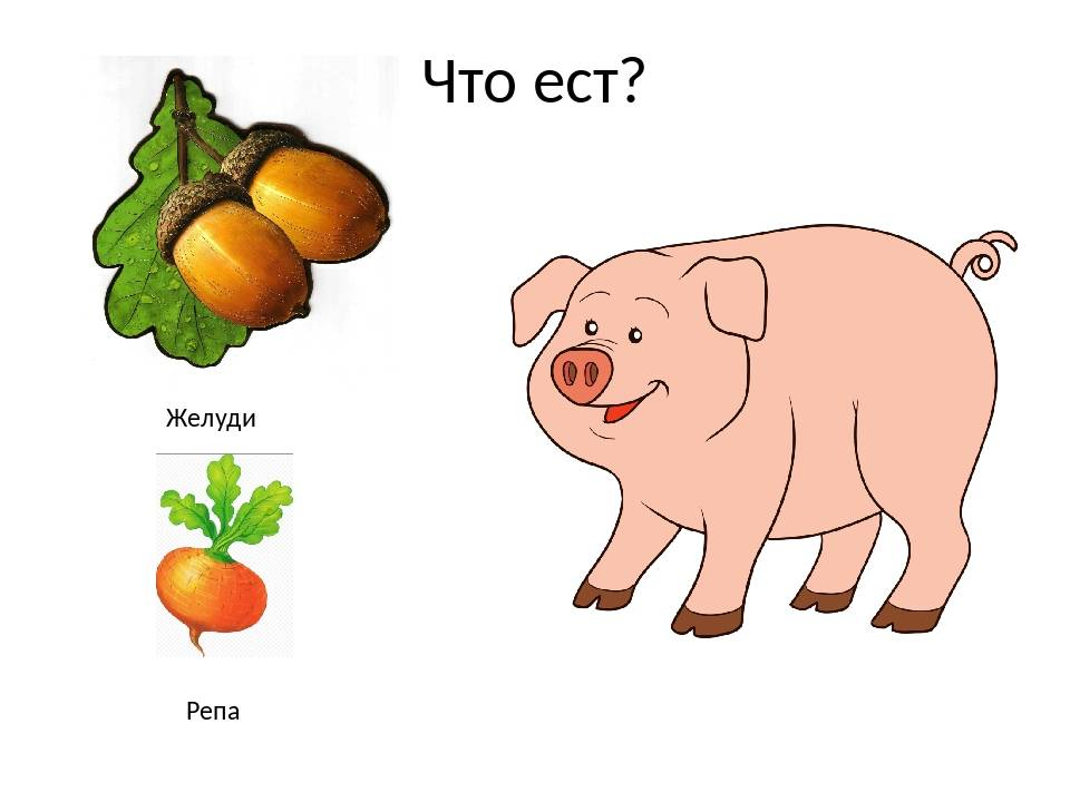 ✅ плод дуба желудь рассказ 3 класс - питомник46.рф