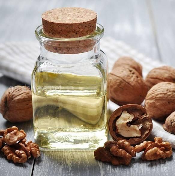 Польза орехов для мужской потенции и рецепты для улучшения либидо