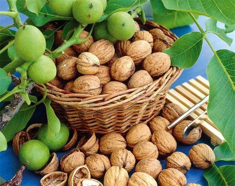 Выращивание ореха грецкого