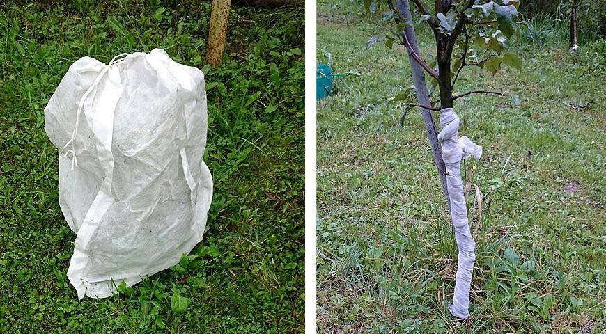 Подготовка колоновидных яблонь к зиме: как утеплять и укрывать деревья от мороза