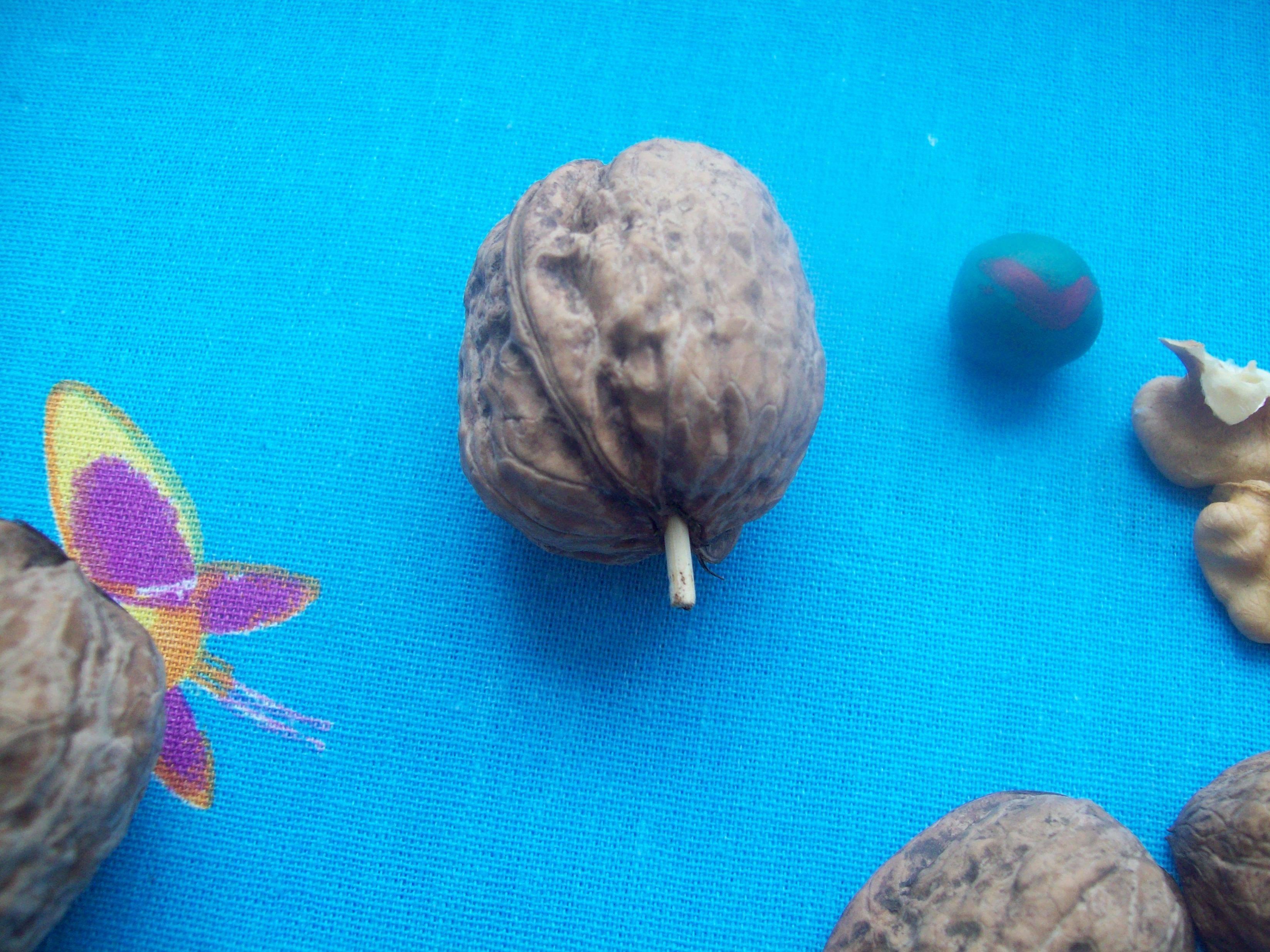Поделки из скорлупы орехов — 130 фото поделок и описание что можно сделать из скорлупы своими руками