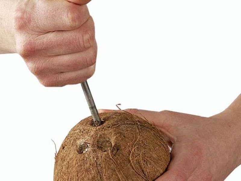 Виды кокосов, чем отличается зеленый, коричневый и желтый