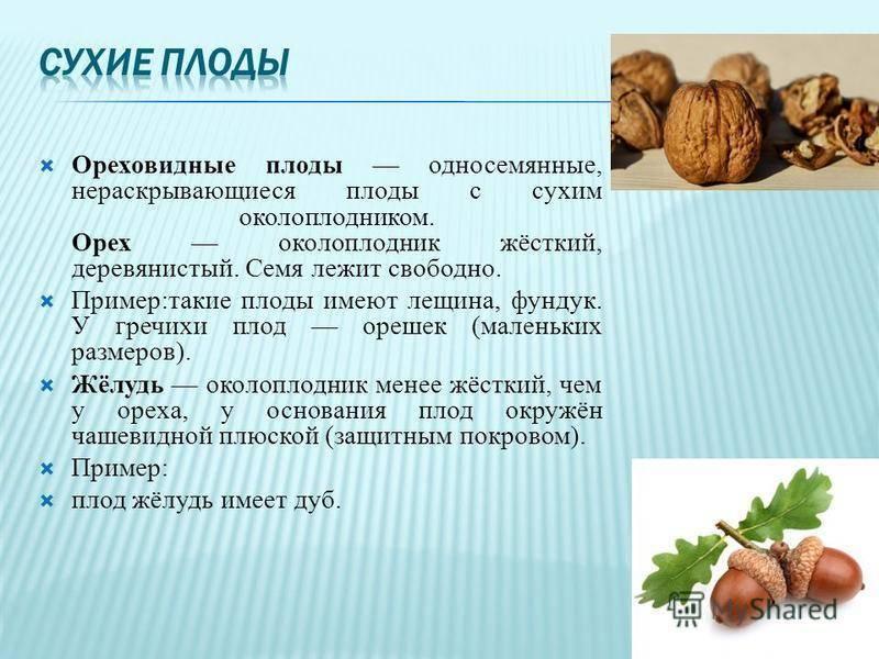 Полезное и ароматное масло ореха фундука: получение, свойства, применение