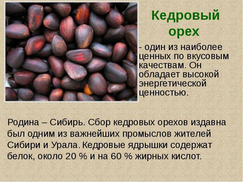 Орех кола: состав, польза и свойства ореха кола