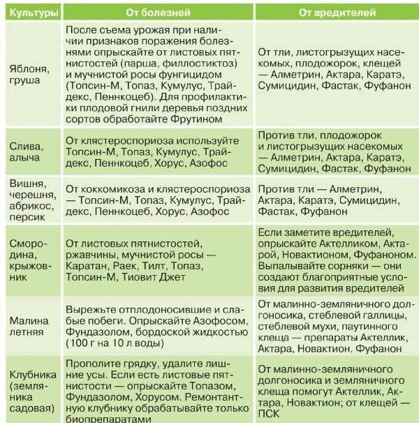 Сорт ореха великан: описание и характеристика, история появления, плюсы и минусы, отличие от других видов, особенности выращивания