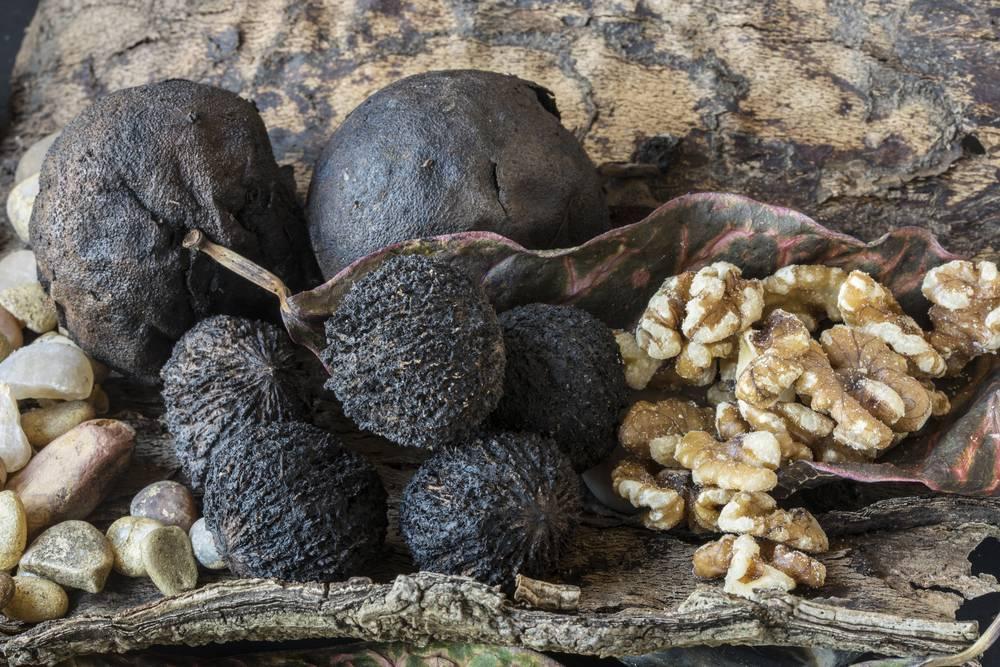 Черный орех: польза и вред, применение от паразитов и других болезней