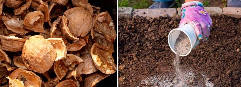 Особенности выращивания насаждений грецкого ореха с междурядным заполнением