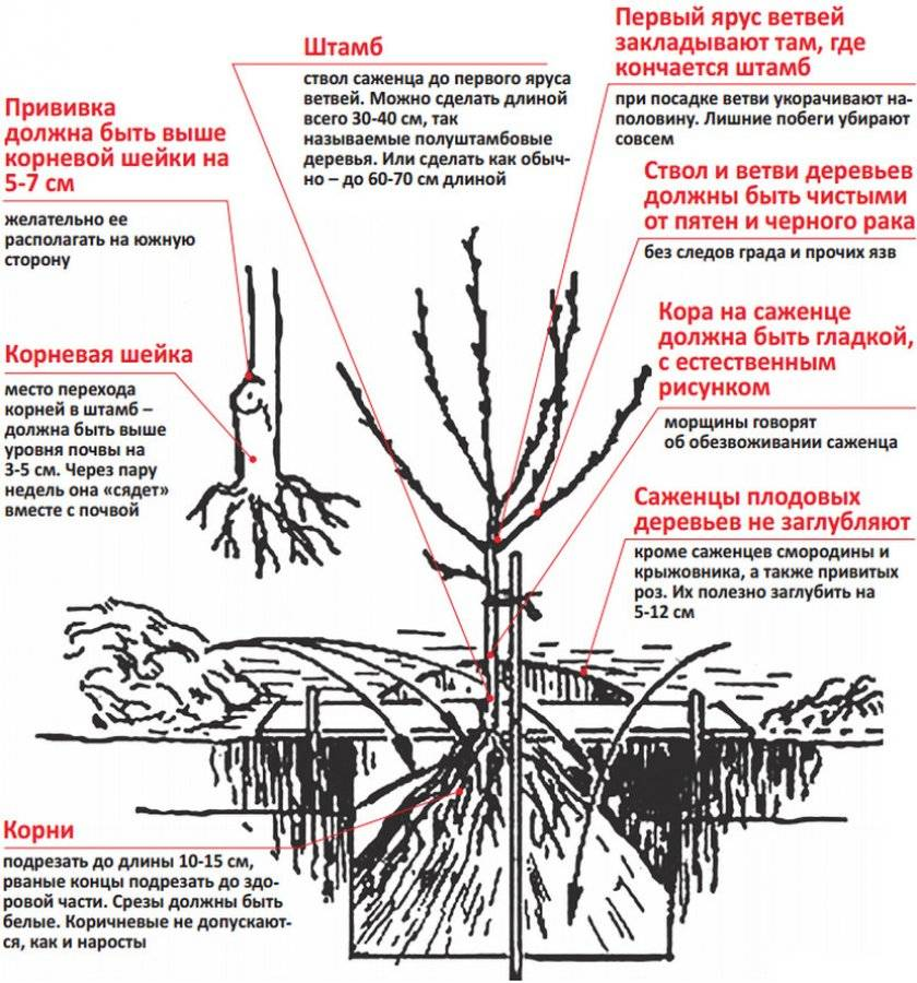 Цветущий декоративный кустарник миндаль: описание с фото, разведение, уход и плоды - sadovnikam.ru