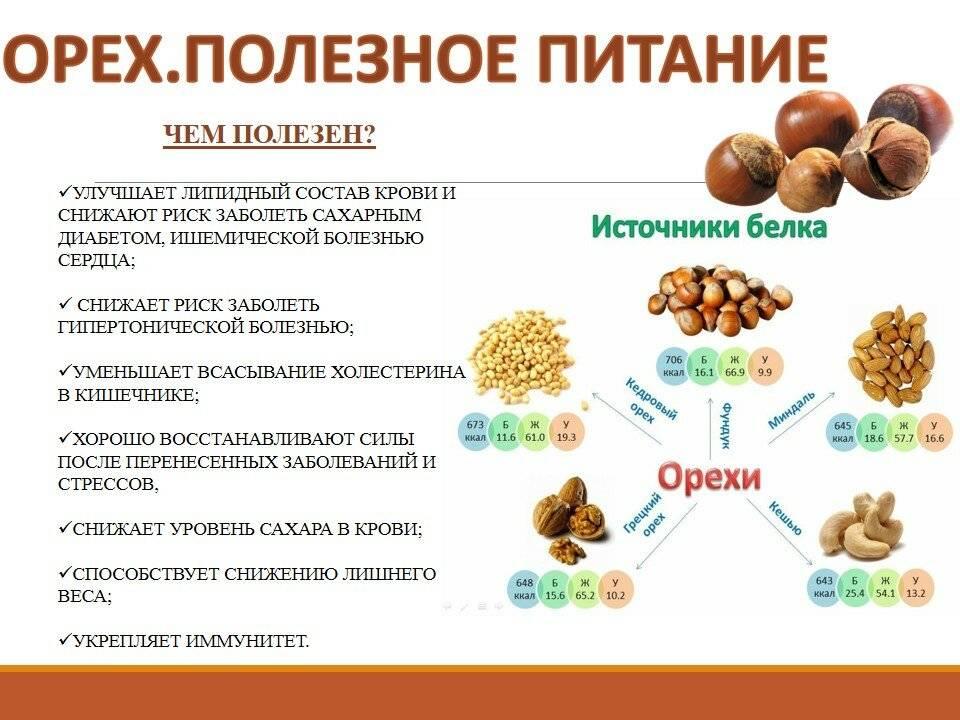 10 полезных свойств кедровых орехов для человека и противопоказания