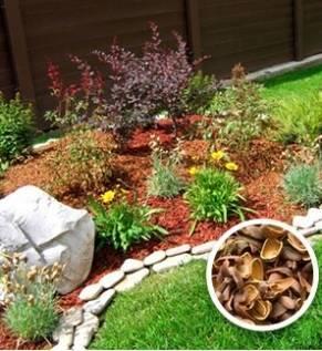 Скорлупа грецкого ореха применение, в народной медицине, в огороде, в саду