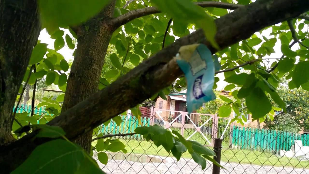 Лопатинский сад в смоленске: история, достопримечательности, фото