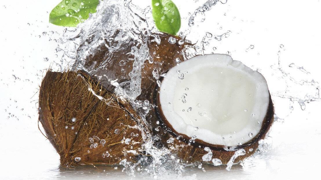 Чем полезен и чем вреден кокос для организма | польза и вред