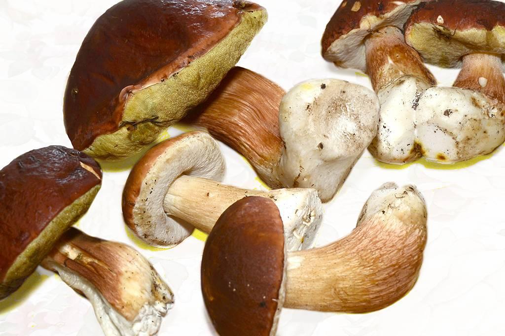 Как засолить грибы фото