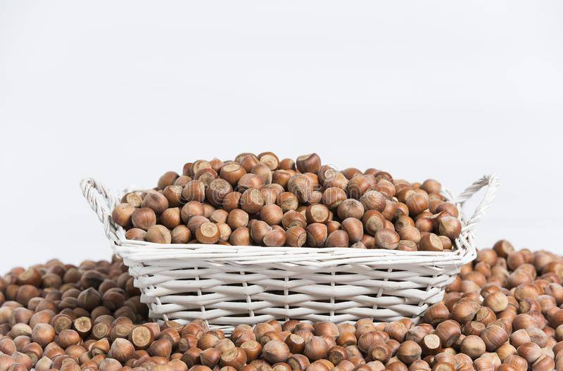 Бизнес на выращивании фундука. расчет вложений, рынки сбыта и перспективы.