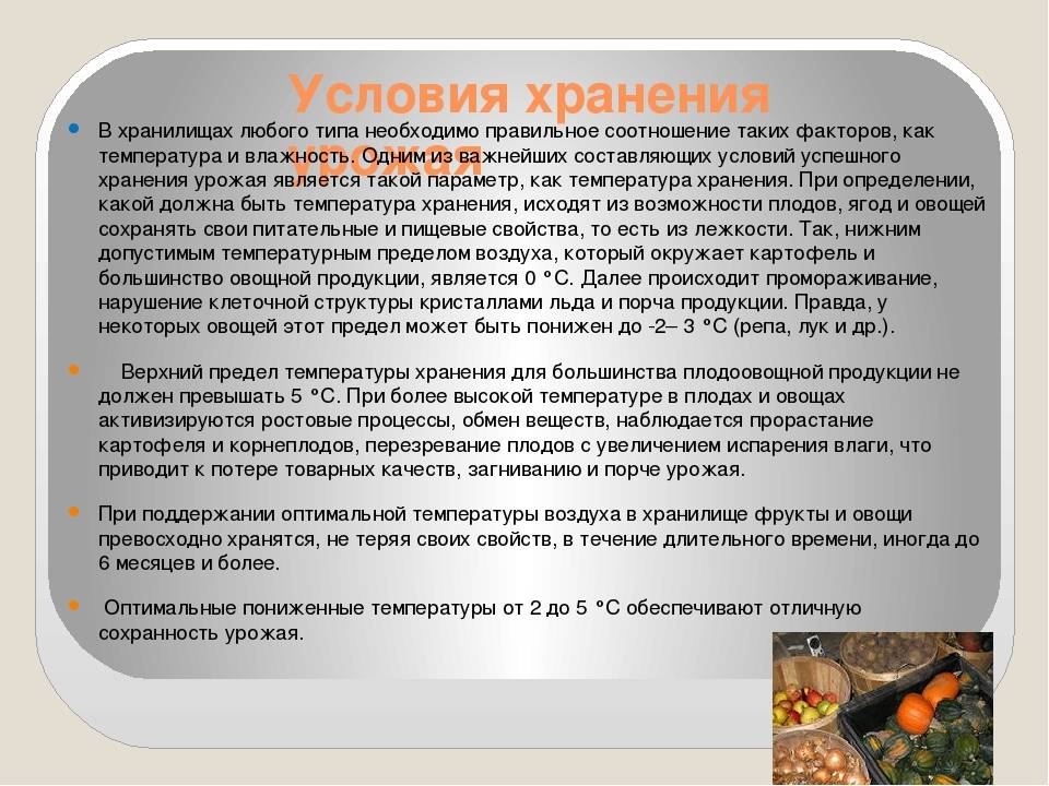 3 хранение картофеля, овощей и плодов - студизба