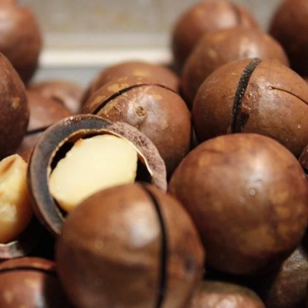 Орех макадамия – польза и вред