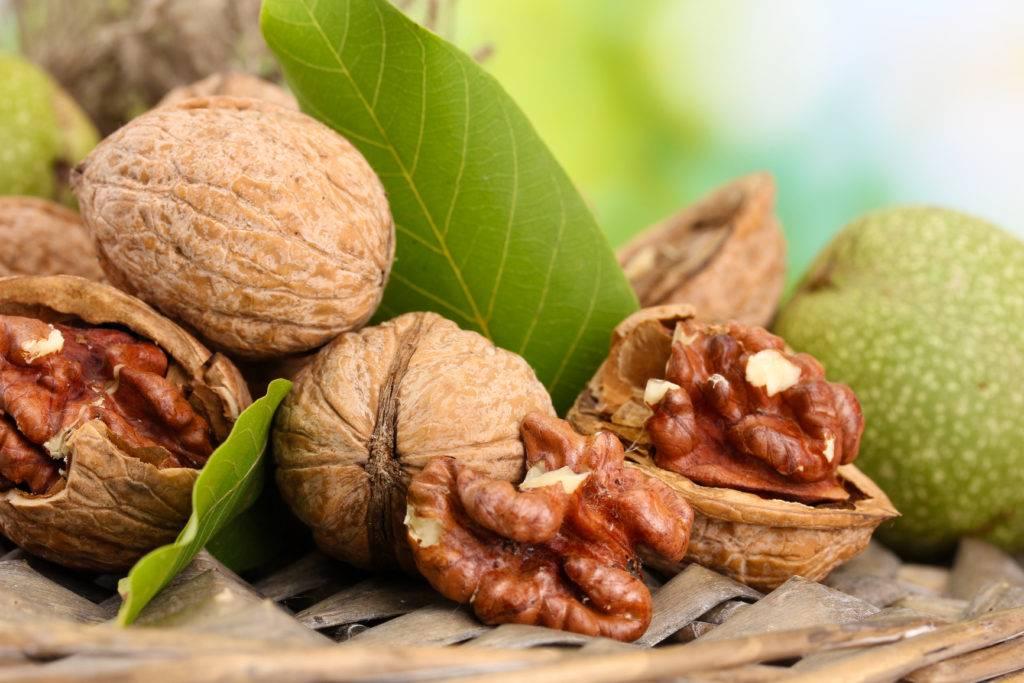 Грецкий орех: полезные свойства, противопоказания, рецепты