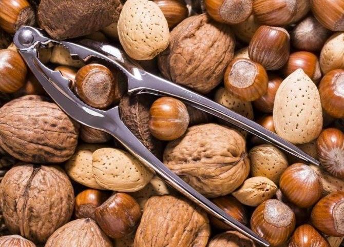 Сажать орехи фундук