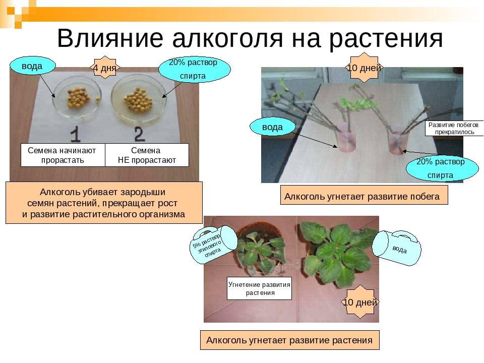 Часть iv: факторы разрушения древесины