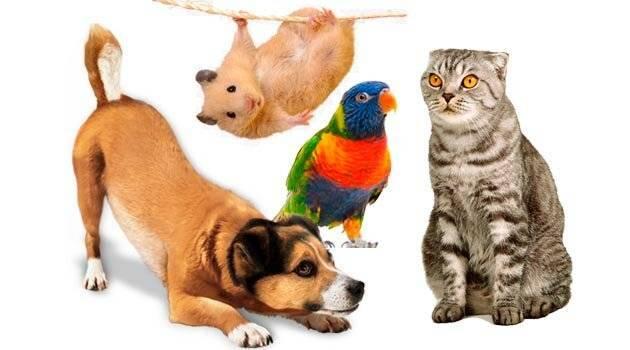 Можно ли давать семечки собаке (тыквенные, подсолнечные, с кожурой или без)   все о собаках