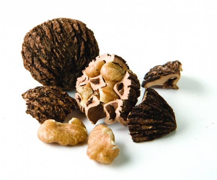 Польза и вред черного ореха | польза и вред