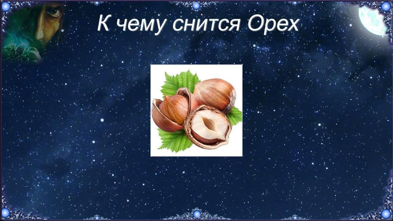 К чему снятся орехи фундук: значение и толкование сна - tolksnov.ru