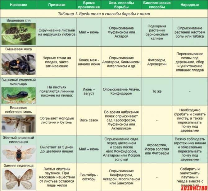 """Миндаль """"прибрежный"""": описание сорта и отличие от других, история селекции, правила выращивания, способы борьбы с болезнями и вредителями"""