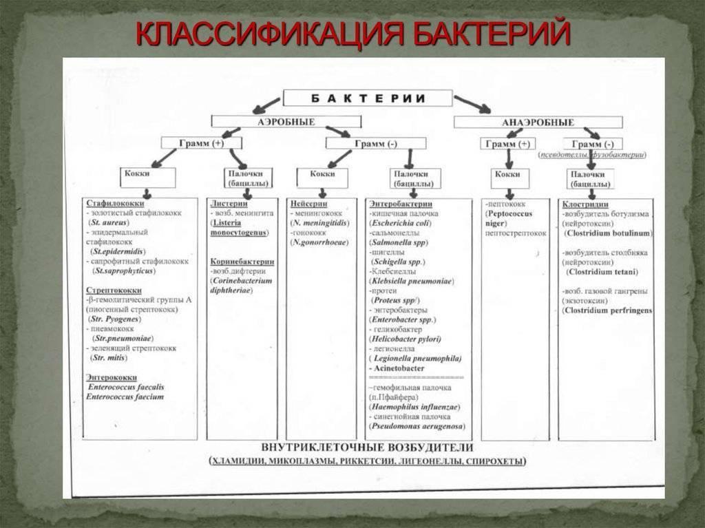 Основные принципы классификации микробов.
