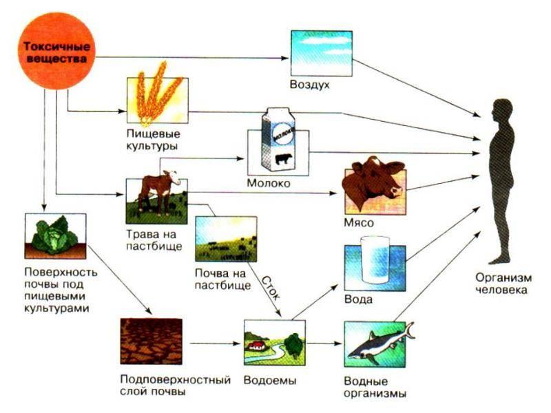 Взгляд на орехово-фундучную отрасль украины из «ковчега» — портал ореховод