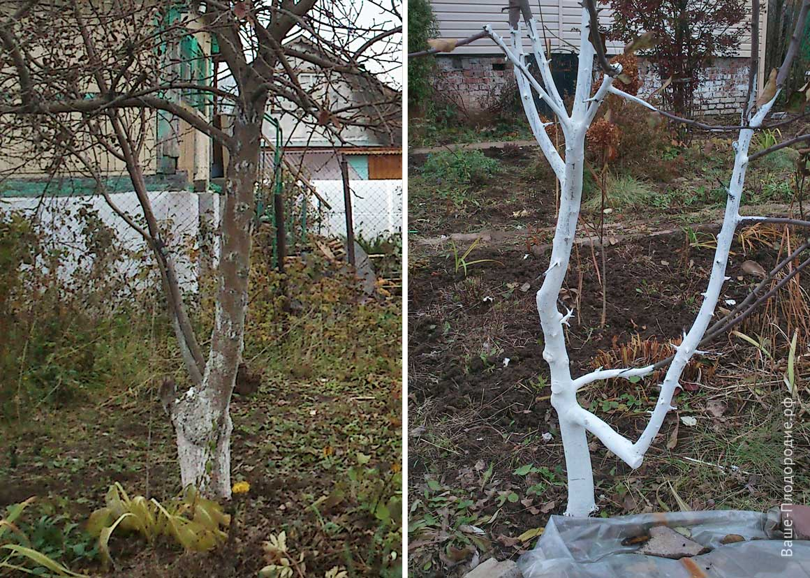 5 ошибок подготовки растений к зиме. укрытие растений. фото — ботаничка.ru