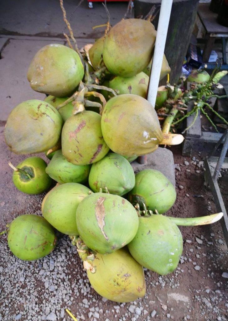 Мякоть кокоса: польза и вред, применение