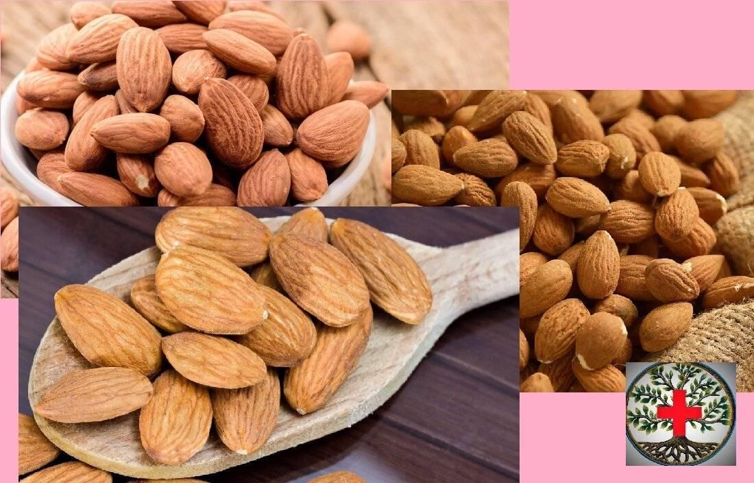 8 орехов для памяти: какие из них улучшают запоминание и полезны для работы мозга человека?