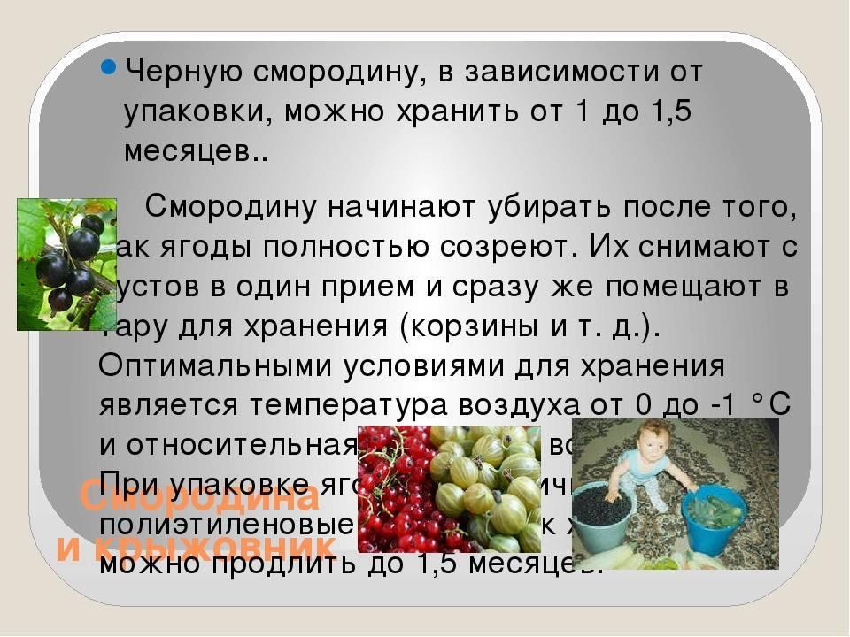 Читать книгу хранение плодов и овощей ю. хацкевич : онлайн чтение - страница 1
