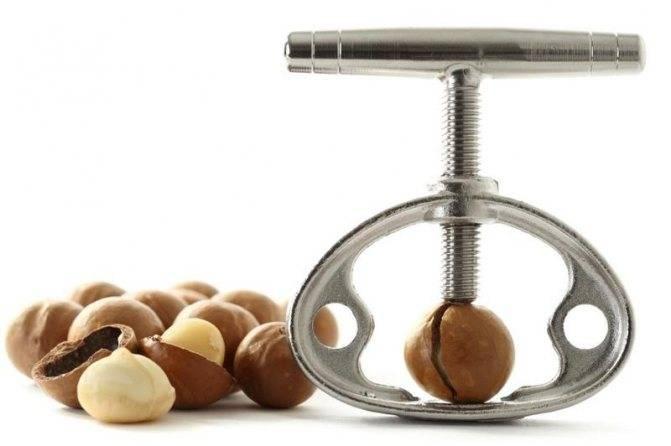 Польза макадамии и вред ореха — обзор состав, свойства, характеристики и рекомендации по употреблению (105 фото)