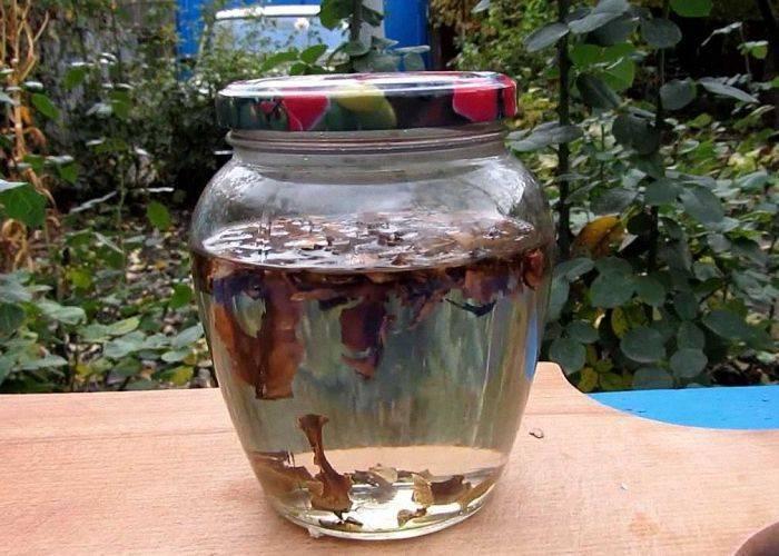 Как сделать и принимать настойку из зеленых грецких орехов на водке