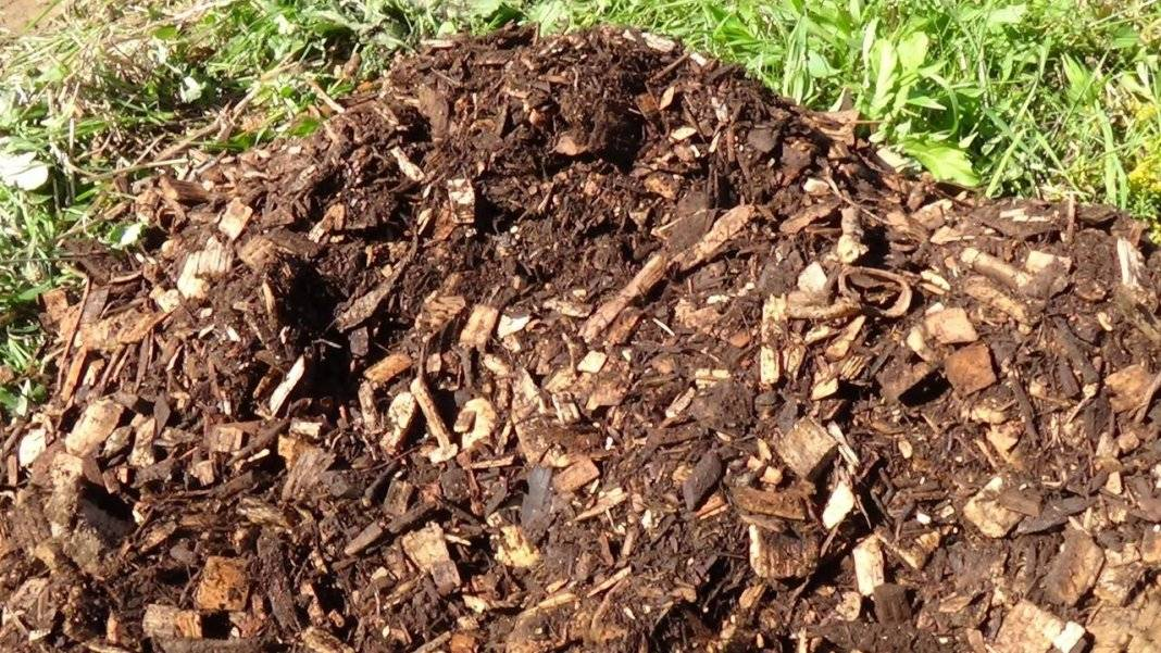 Шелуха от семечек, как удобрение, как применять. использование шелухи от семечек на огороде
