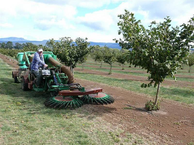 Бизнес на выращивании грецкого ореха (декабрь 2020) — vipidei.com