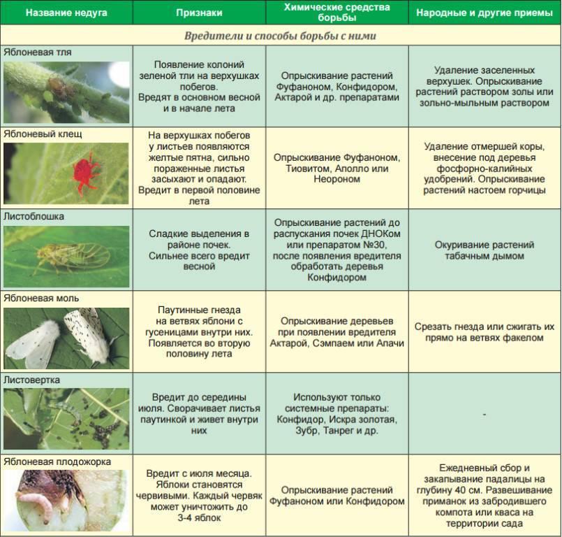 Система защиты и листовых подкормок ореха грецкого | fermer.ru - фермер.ру - главный фермерский портал - все о бизнесе в сельском хозяйстве. форум фермеров.
