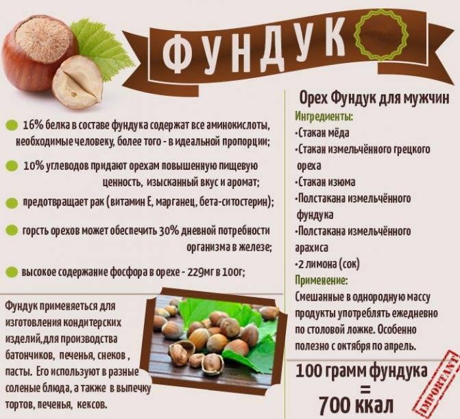 Полезные свойства и противопоказания кедрового ореха