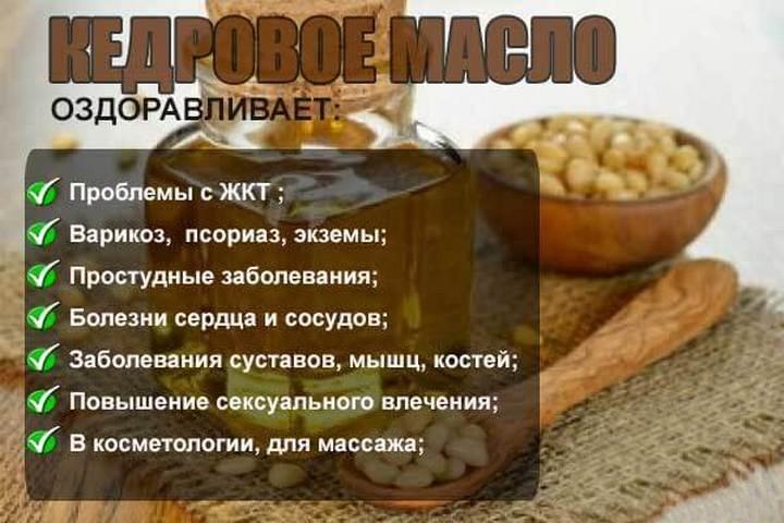 «лекарство от сотни болезней» — кедровое масло, его полезные свойства и противопоказания