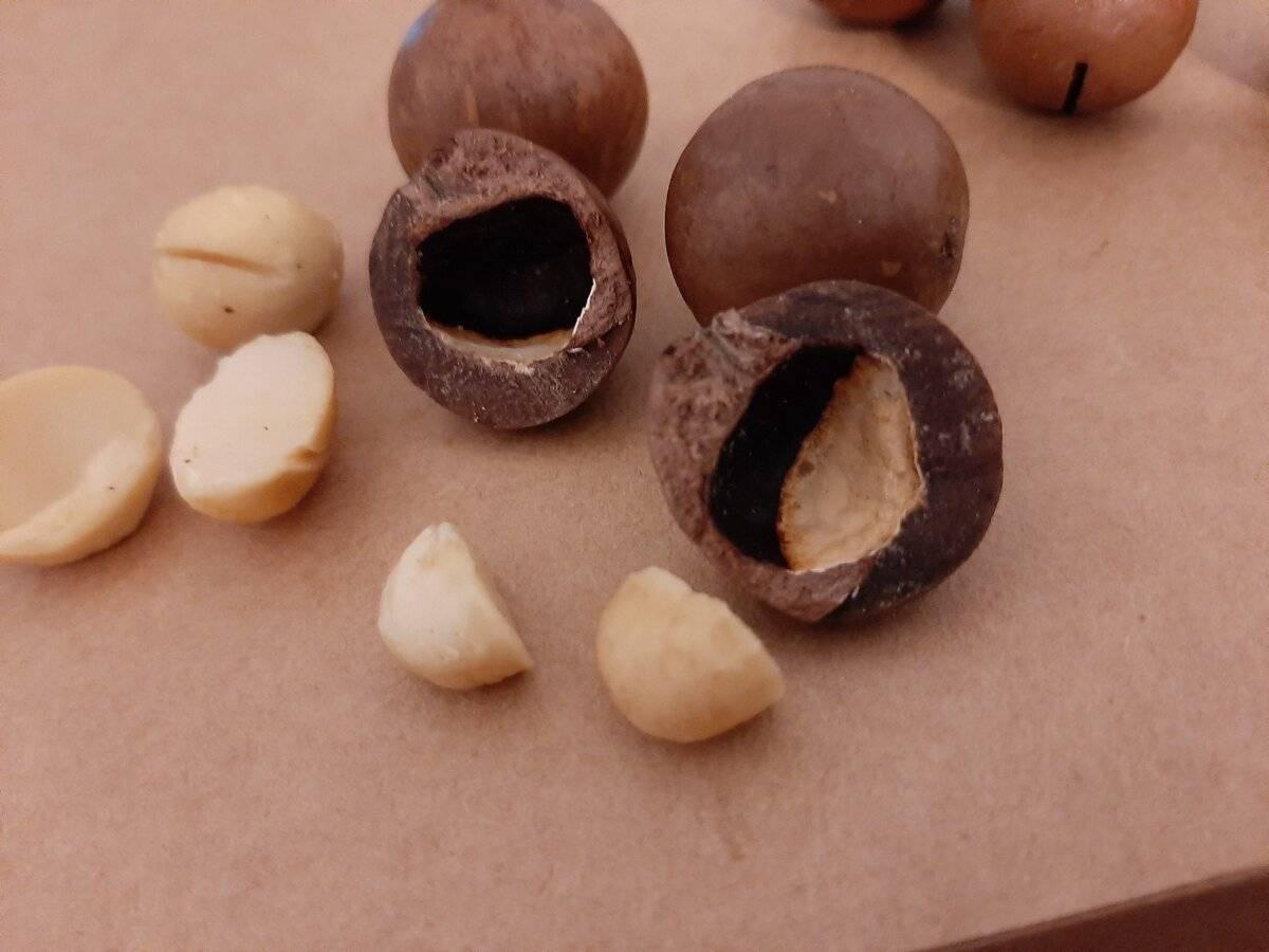Макадамия — самый прочный и дорогой орех в мире