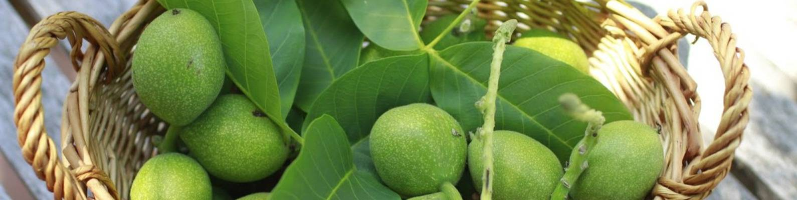 Лечебные свойства зеленого грецкого ореха — рецепты с медом, применение