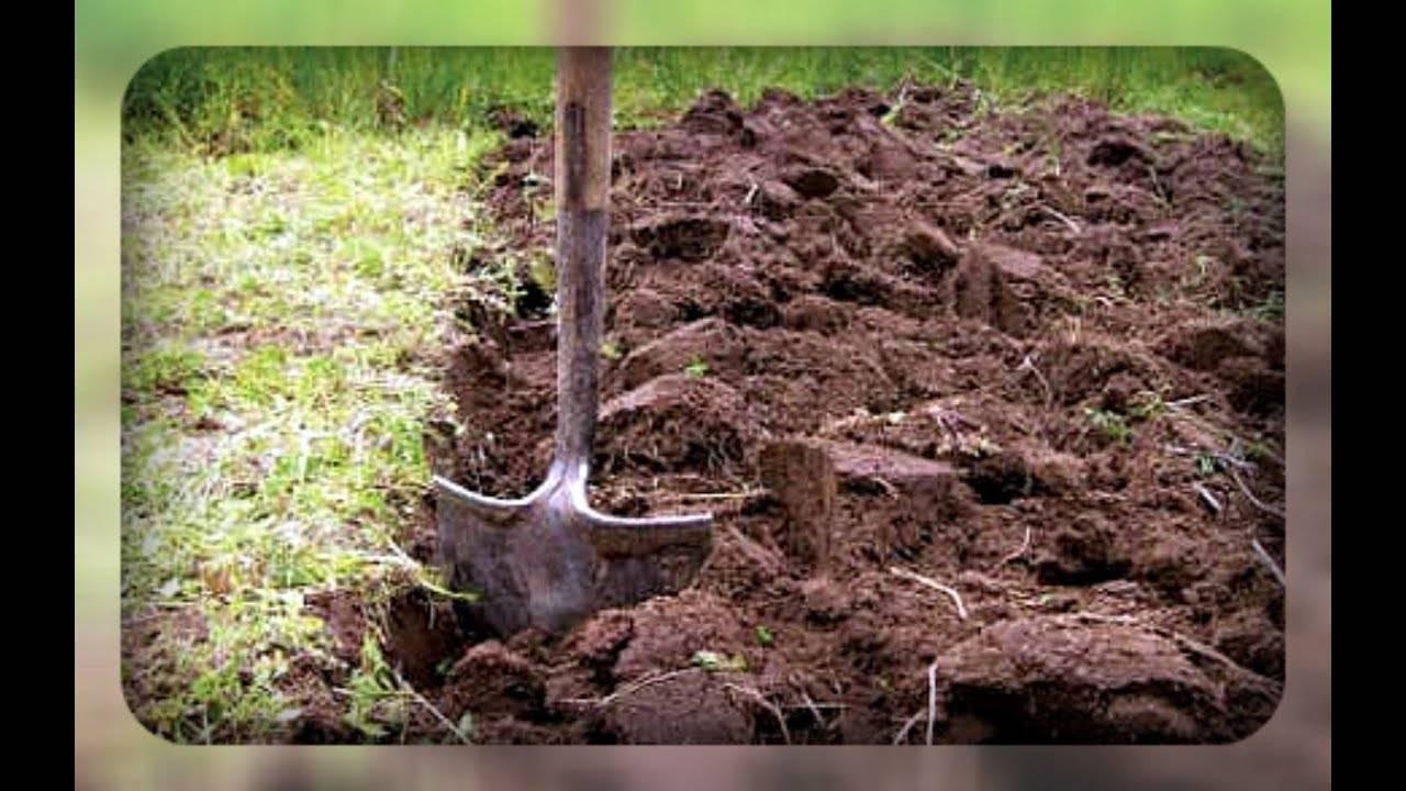 Сидераты для огорода для улучшения плодородия почвы: когда сеять и срезать