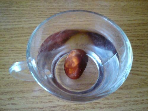 Травы от гайморита: лечение недуга в домашних условиях