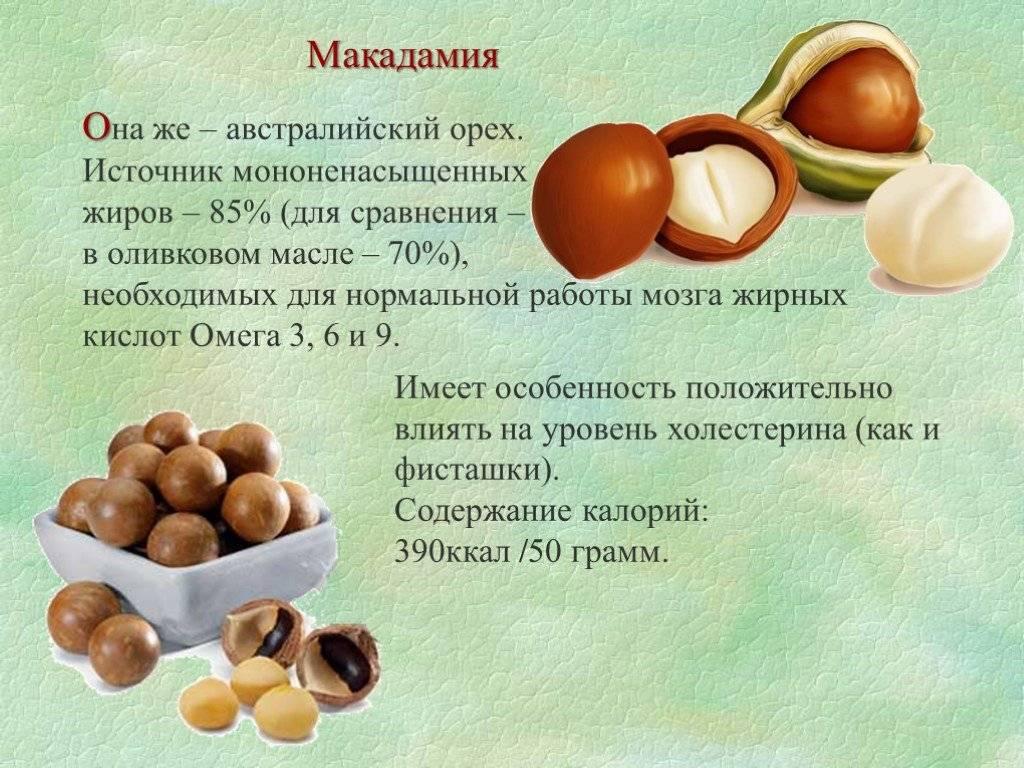 Орех макадамия: польза и вред, отзывы и фото