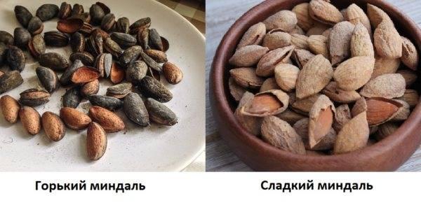 Миндаль и абрикосовые косточки: как отличить, одно и то же это или нет, в чем разница между орехом и ядром фрукта, являются ли растения родственниками, и сравнение