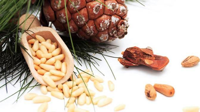 Сонник кедровые орехи шишки. к чему снится кедровые орехи шишки видеть во сне - сонник дома солнца
