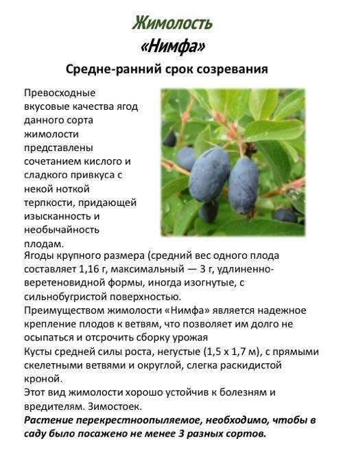 Особенности грецкого ореха самохваловичский-2: описание сорта и нюансы выращивания