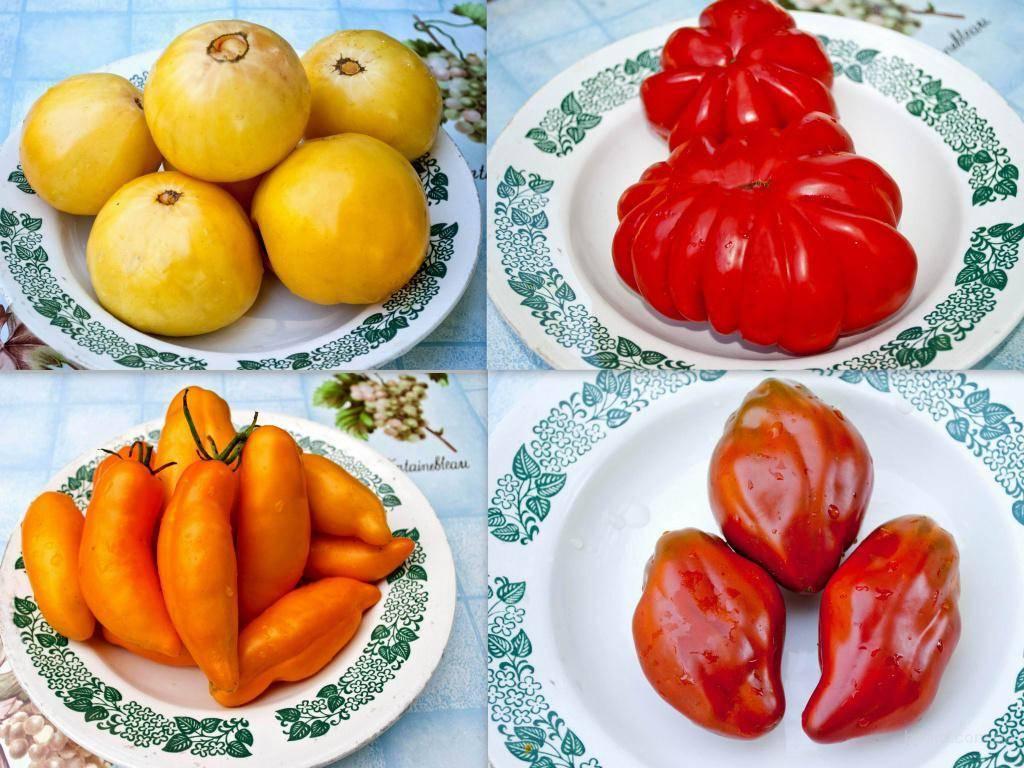 Счастье в теплице: как на кубани выращивают помидоры - краснодарские известия