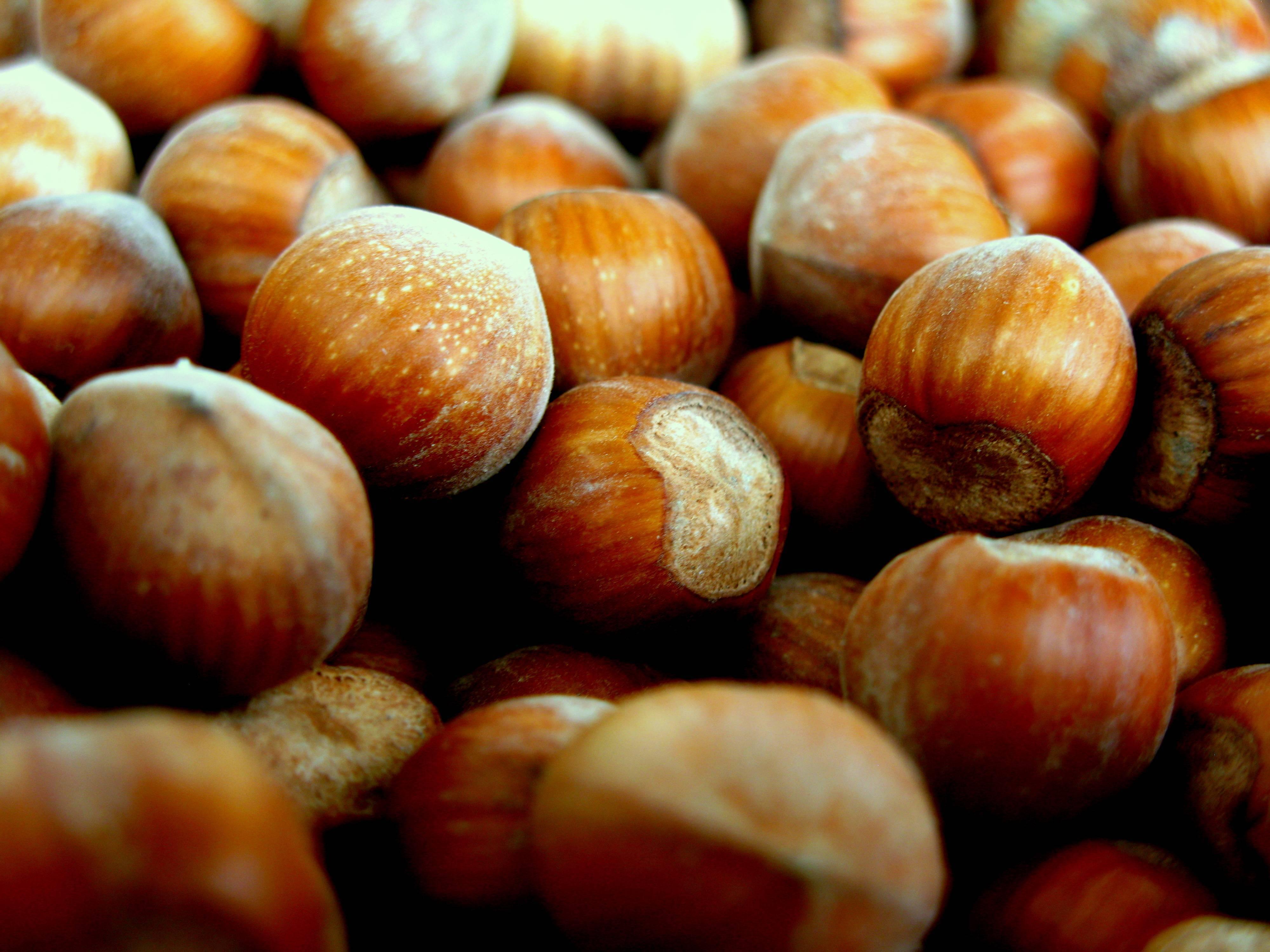 Орехи фундук: польза и вред для организма, калорийность, состав